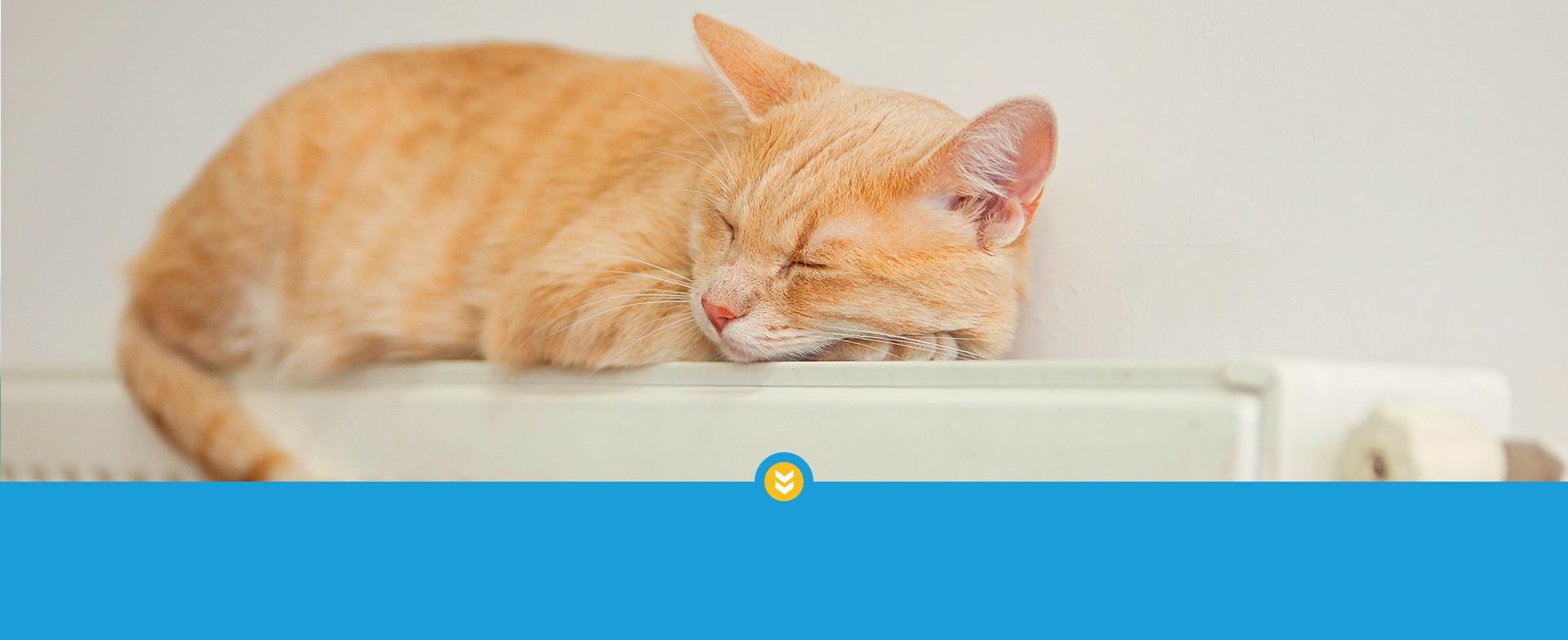 Bild: Kater schläft auf Heizung - wir beraten, planen und realisieren Ihre Heizung.